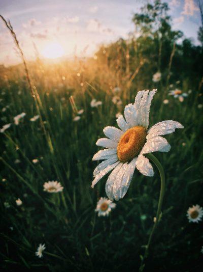 פרח, טל, בוקר, זריחה